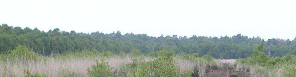Whippets vom Husbäker Moor