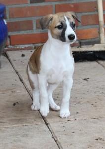 Camilla2