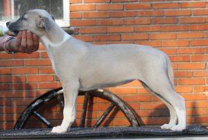 Feline1